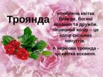 улюблена квітка Венери, богині кохання та дружби. Червоний колір – це колір с...