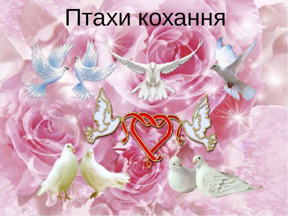 Птахи кохання