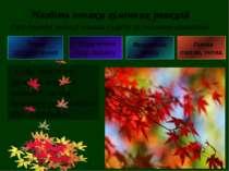 Про перебіг реакції можна судити за певними ознаками Зміна забарвлення Виділе...