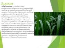 Вологість Вода/Вологість— це один із трьох найважливіших абіотичних екологіч...