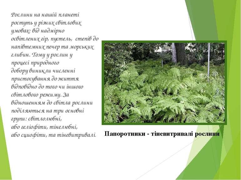 Рослини на нашій планеті ростуть у різних світлових умовах: від надмірно осві...