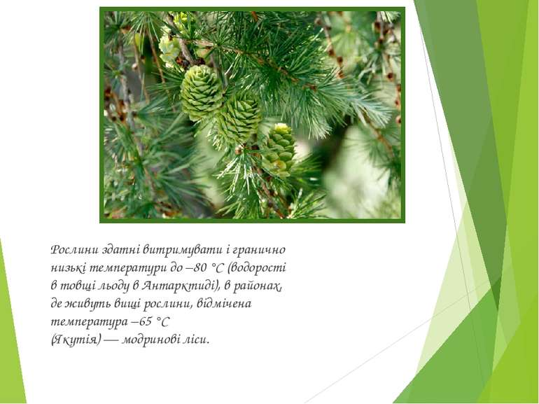 Рослини здатні витримувати і гранично низькі температури до −80°C (водорості...
