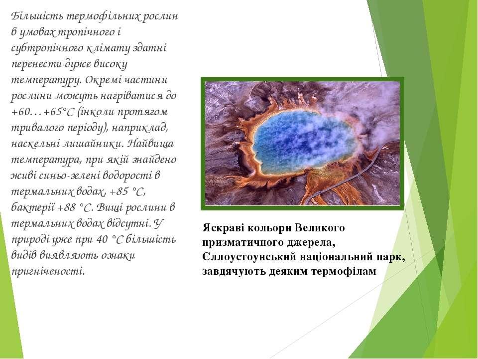 Більшість термофільних рослин в умовах тропічного і субтропічного клімату зда...