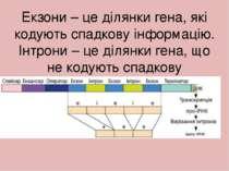 Екзони – це ділянки гена, які кодують спадкову інформацію. Інтрони – це ділян...