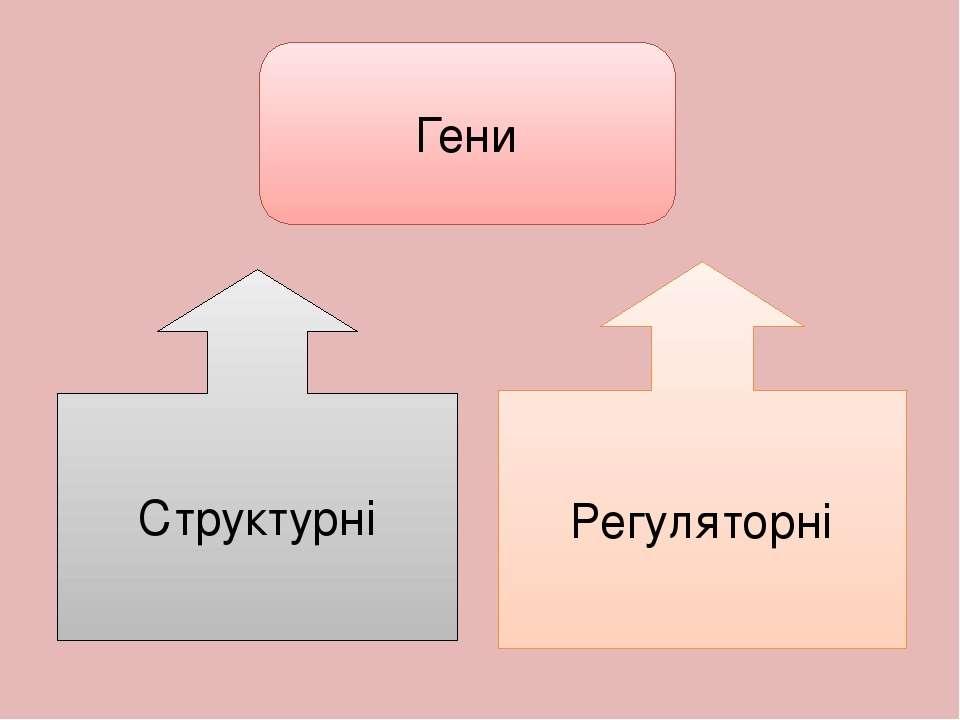 Гени Структурні Регуляторні