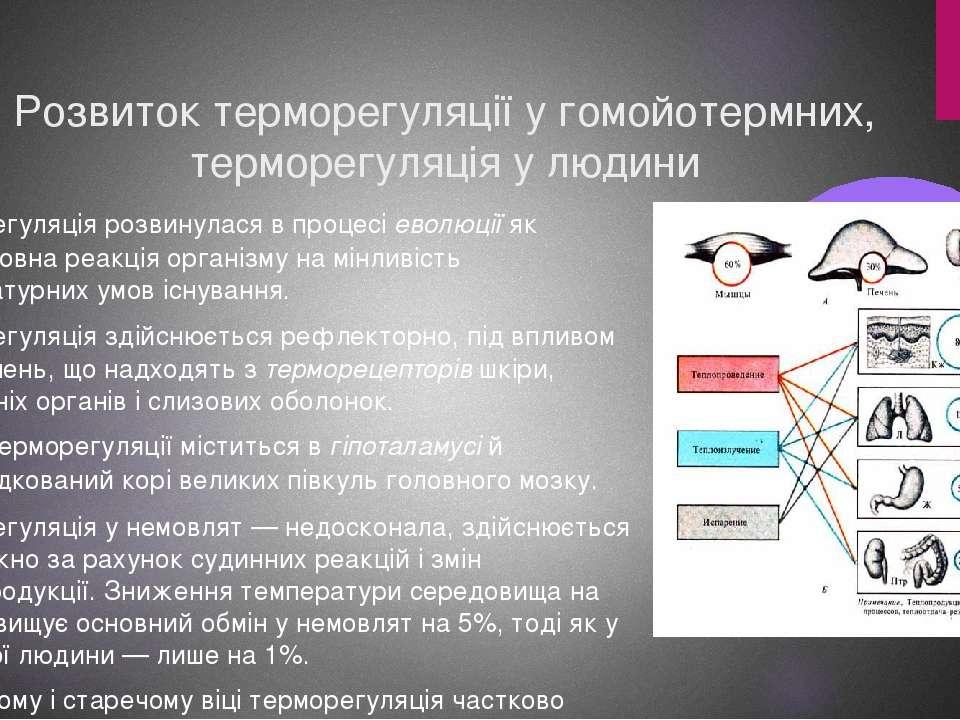 Розвиток терморегуляції у гомойотермних, терморегуляція у людини Терморегуляц...