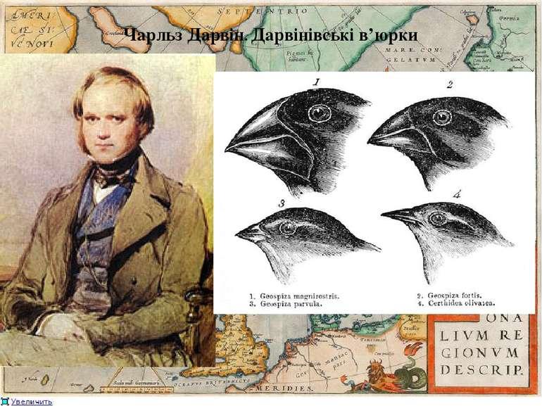Чарльз Дарвін. Дарвінівські в'юрки