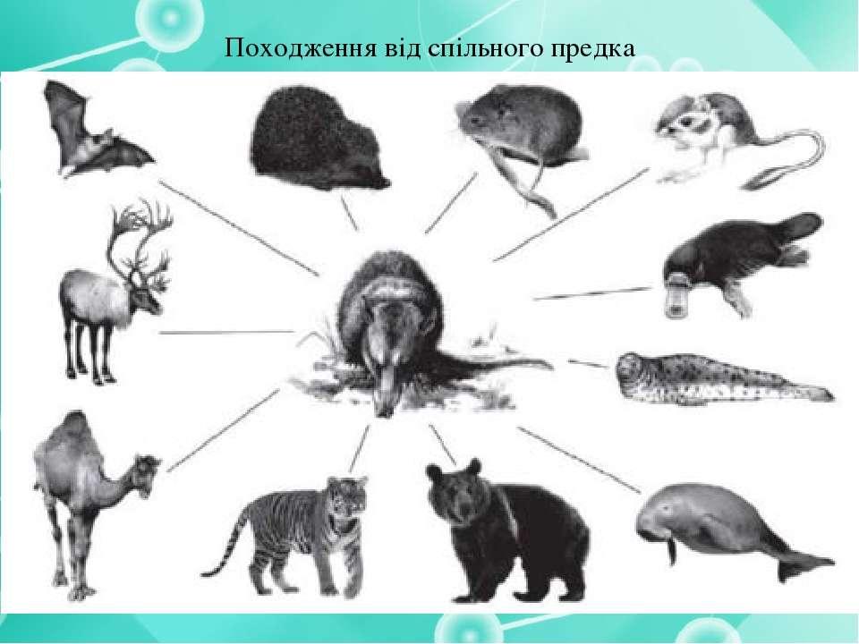 Походження від спільного предка