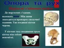 Нерухомі з'єднання кісток До нерухомих з'єднань належать шви. Між ними знаход...