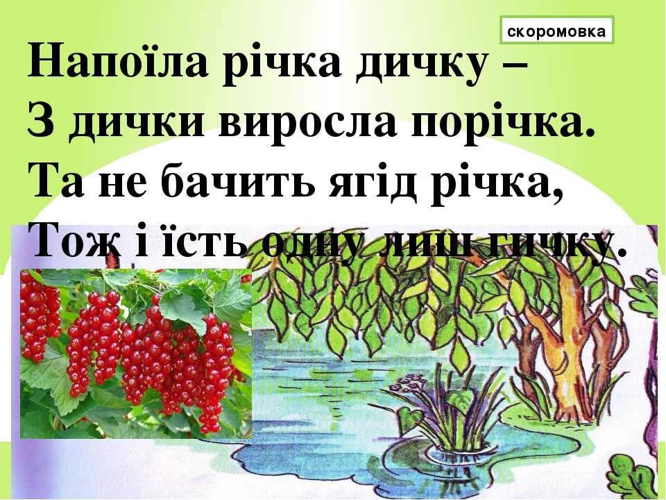 скоромовка Напоїла річка дичку – З дички виросла порічка. Та не бачить ягід р...