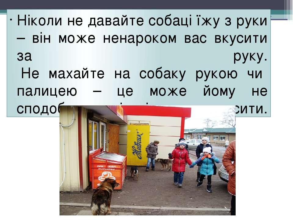 Ніколи не давайте собаці їжу з руки – він може ненароком вас вкусити за руку....