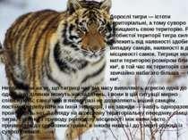 Дорослі тигри — істоти територіальні, а тому суворо захищають свою територію....