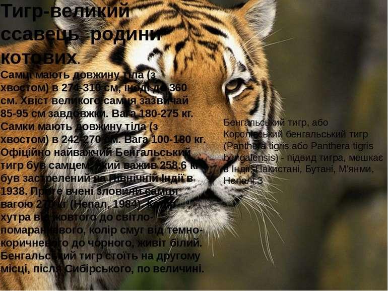 Тигр-великий ссавець родини котових. Самці мають довжину тіла (з хвостом) в 2...