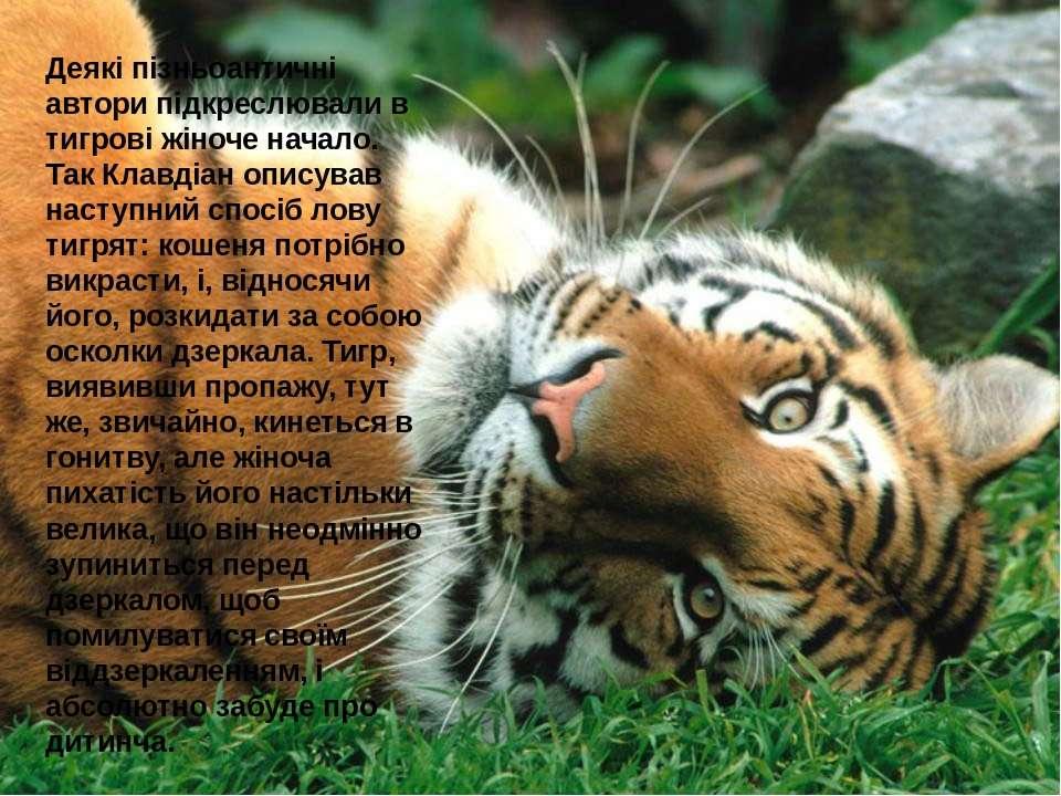 Деякі пізньоантичні автори підкреслювали в тигрові жіноче начало. Так Клавдіа...
