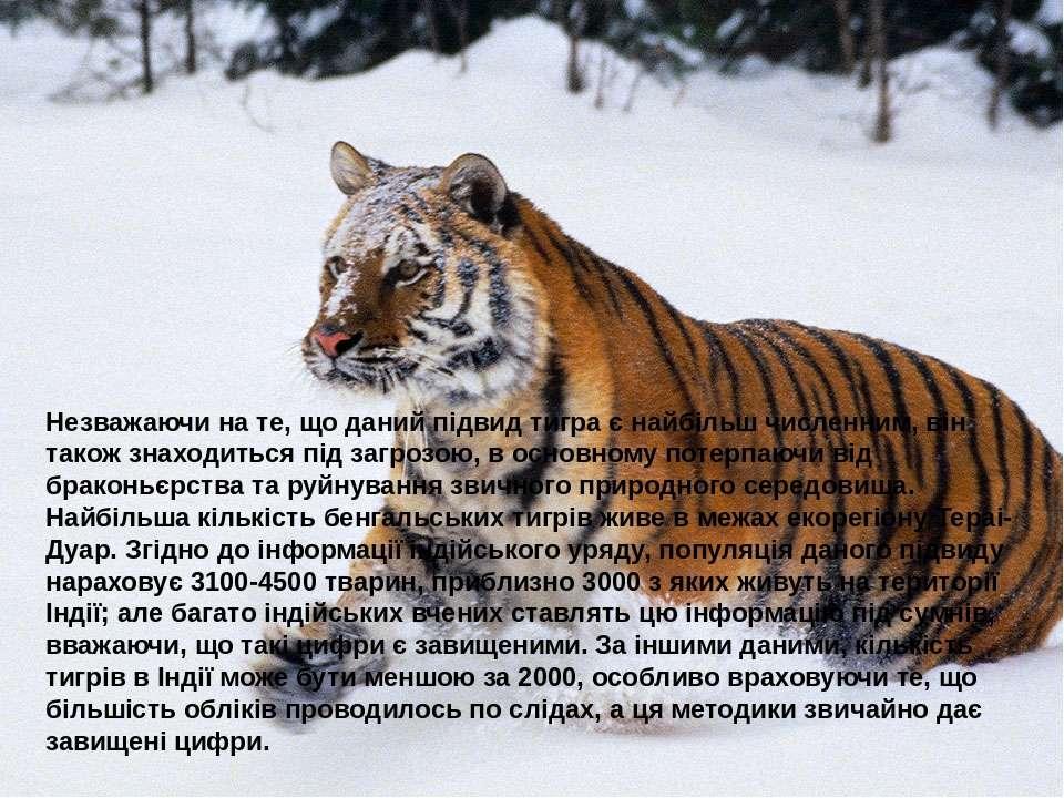 Незважаючи на те, що даний підвид тигра є найбільш численним, він також знахо...