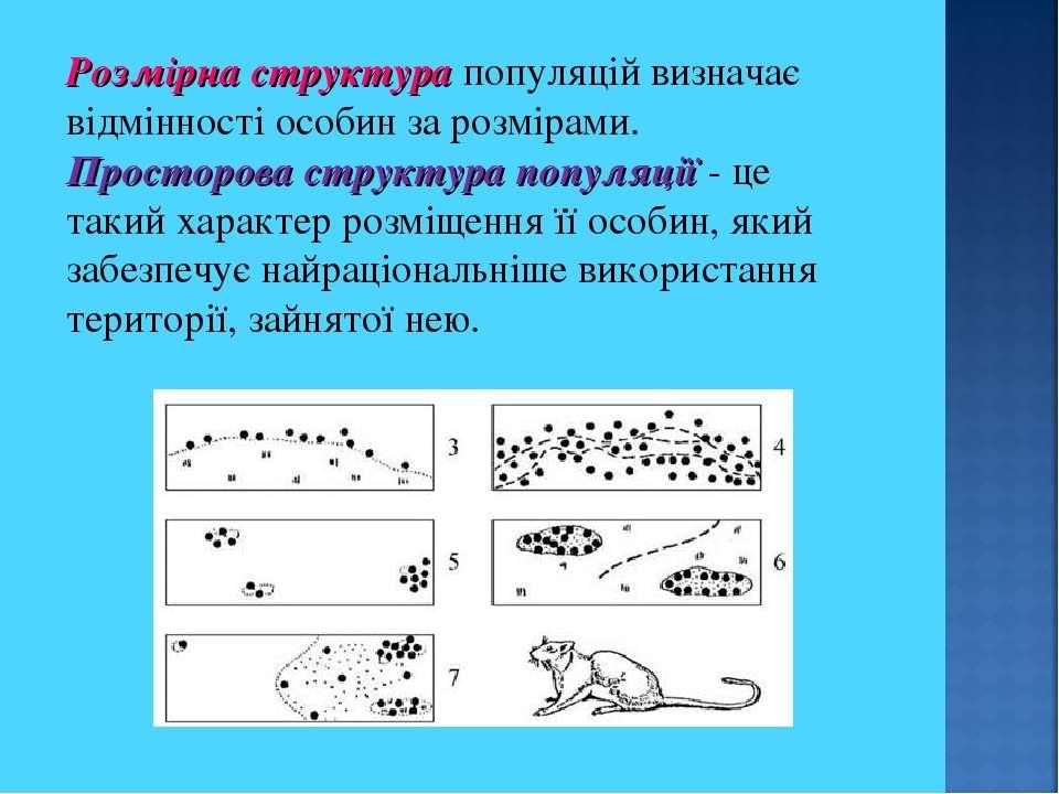 Розмірна структура популяцій визначає відмінності особин за розмірами. Просто...