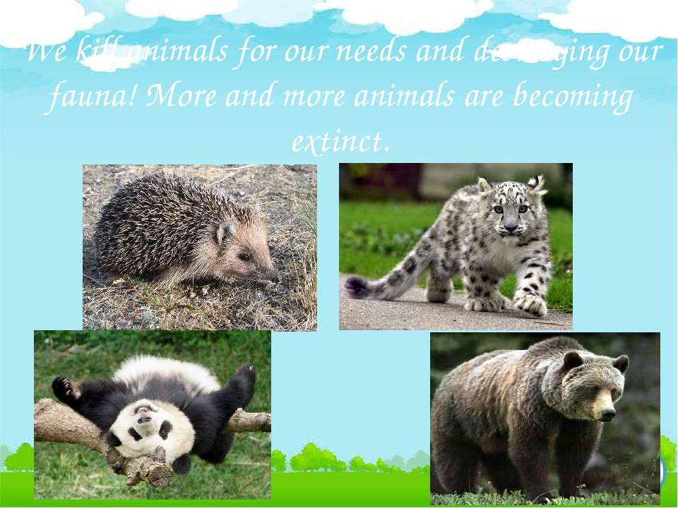 We kill animals for our needs and destroying our fauna! More and more animals...