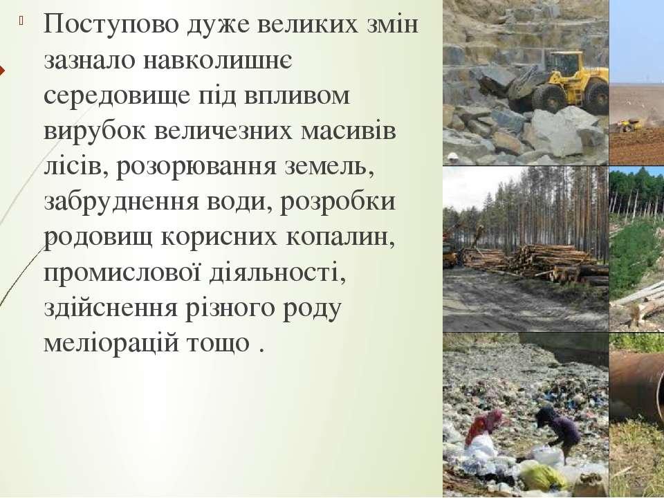Поступово дуже великих змін зазнало навколишнє середовище під впливом вирубок...