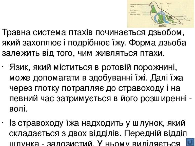 Узагальнення: травлення хребетних Особливості Риби Амфібії Рептилії Птахи Сса...