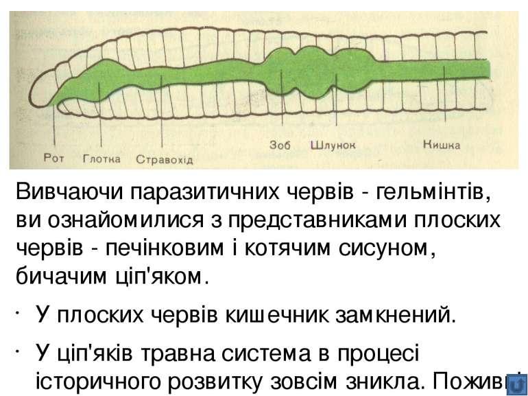 Травна система рептилій дещо складніша порівняно з амфібіями. Слина, яку виро...