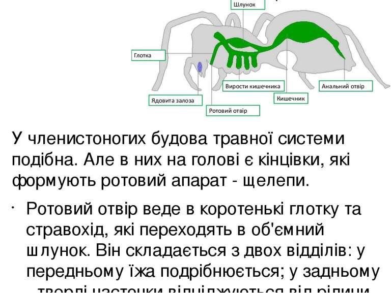 Травна система птахів починається дзьобом, який захоплює і подрібнює їжу. Фор...