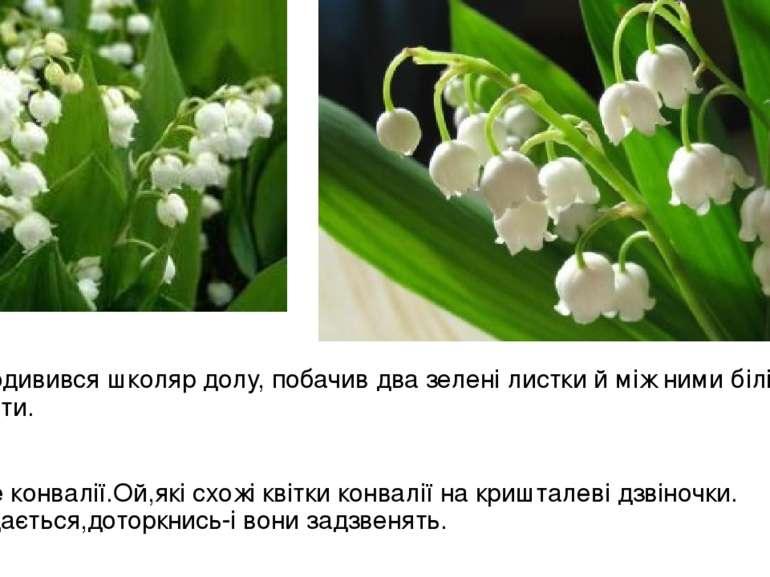 Подивився школяр долу, побачив два зелені листки й між ними білі квіти. Це ко...