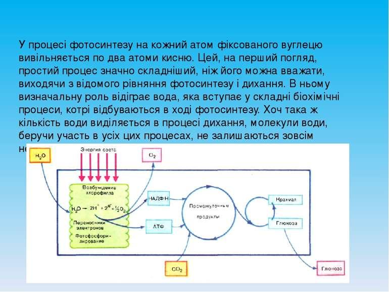 У процесі фотосинтезу на кожний атом фіксованого вуглецю вивільняється по два...