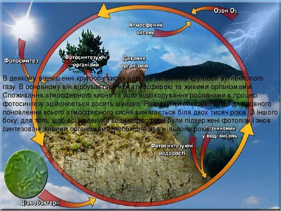 В деякому відношенні кругообіг кисня нагадує зворотний кругообіг вуглекислого...