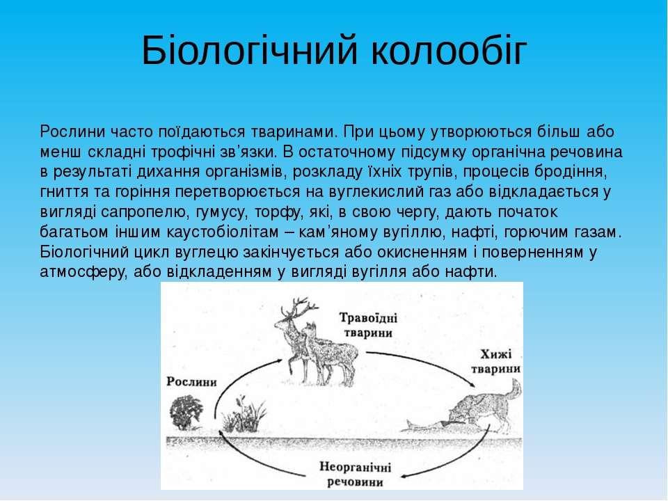 Біологічний колообіг Рослини часто поїдаються тваринами. При цьому утворюютьс...