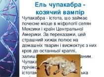 Ель чупакабра - козячий вампір Чупакабра - істота, що займає почесне місце в ...