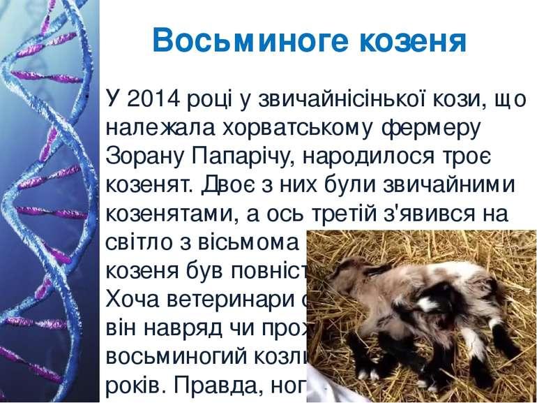 Восьминоге козеня У 2014 році у звичайнісінької кози, що належала хорватськом...