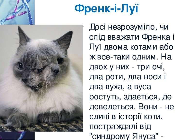 Френк-і-Луї Досі незрозуміло, чи слід вважати Френка і Луї двома котами або ж...
