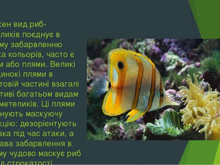 Кожен вид риб-метеликів поєднує в своєму забарвленню кілька кольорів, часто є...