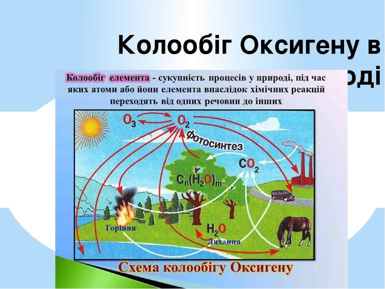 Колообіг Оксигену в природі