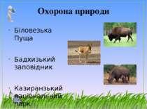 Охорона природи Біловезька Пуща Бадхизький заповідник Казиранзький національн...