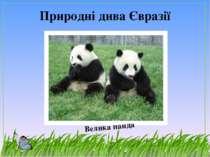Природні дива Євразії Велика панда
