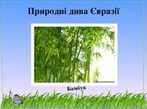 Природні дива Євразії Бамбук