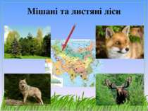 Мішані та листяні ліси