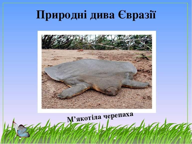Природні дива Євразії М'якотіла черепаха