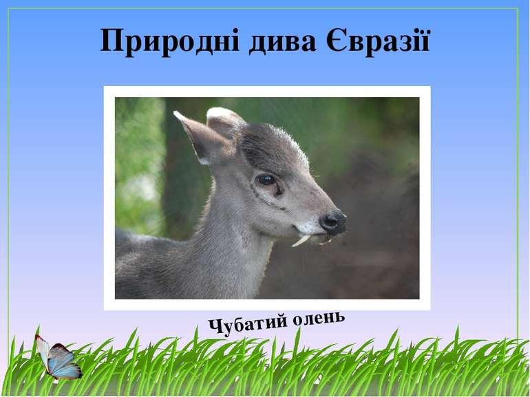 Природні дива Євразії Чубатий олень