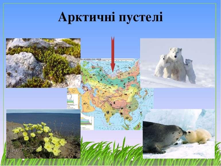 Арктичні пустелі