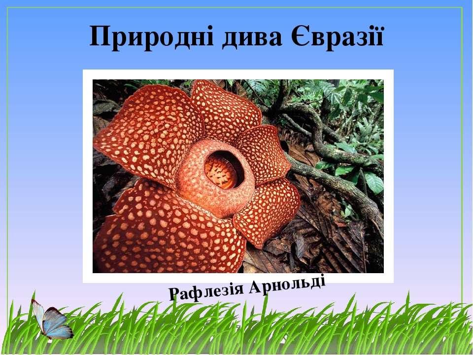 Природні дива Євразії Рафлезія Арнольді