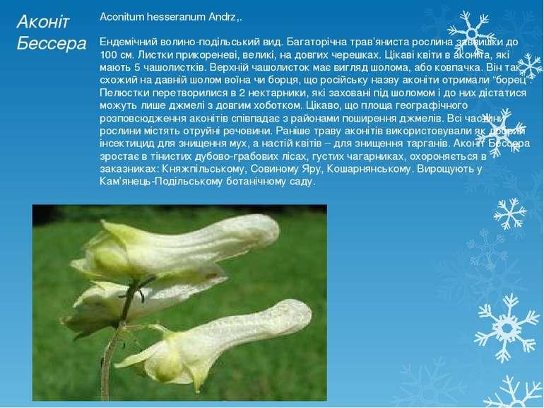 Аконіт Бессера Aconitum hesseranum Andrz,. Ендемічний волино-подільський вид....