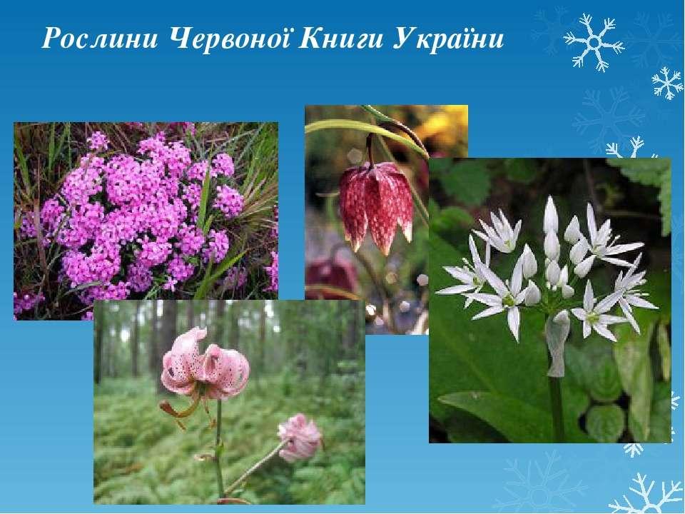 Рослини Червоної Книги України