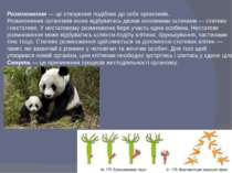 Розмноження — це створення подібних до себе організмів. Розмноження організмі...