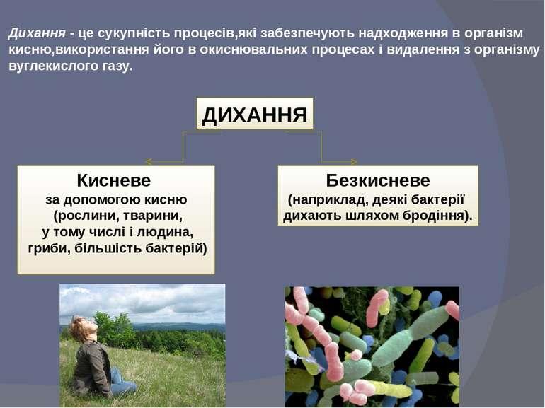 Дихання - це сукупність процесів,які забезпечують надходження в організм кисн...