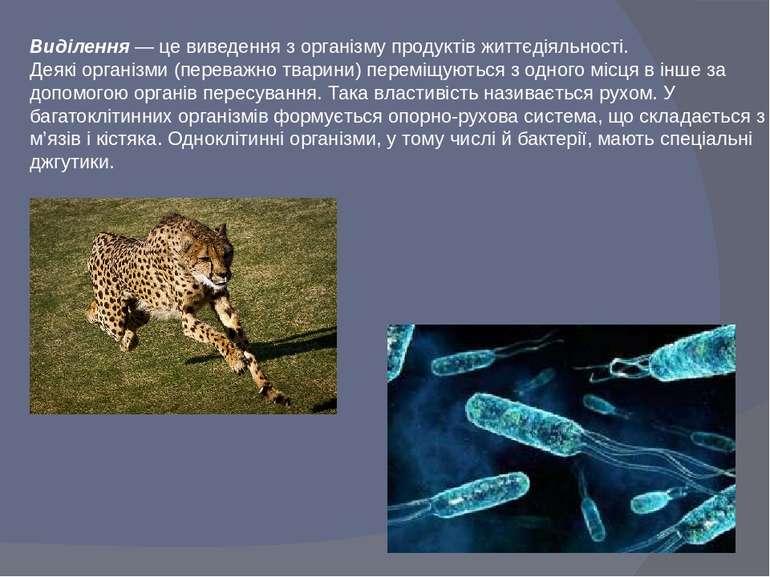 Виділення — це виведення з організму продуктів життєдіяльності. Деякі організ...