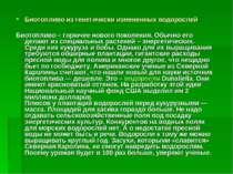 Биотопливо из генетически измененных водорослей Биотопливо – горючее нового п...