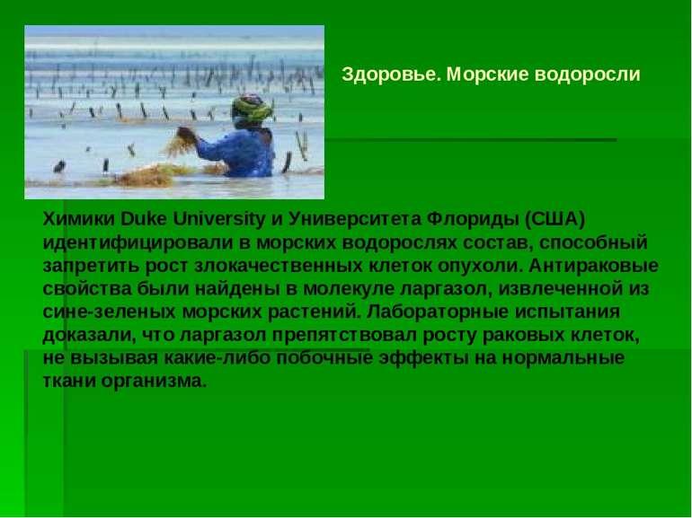 Здоровье. Морские водоросли Химики Duke University и Университета Флориды (СШ...