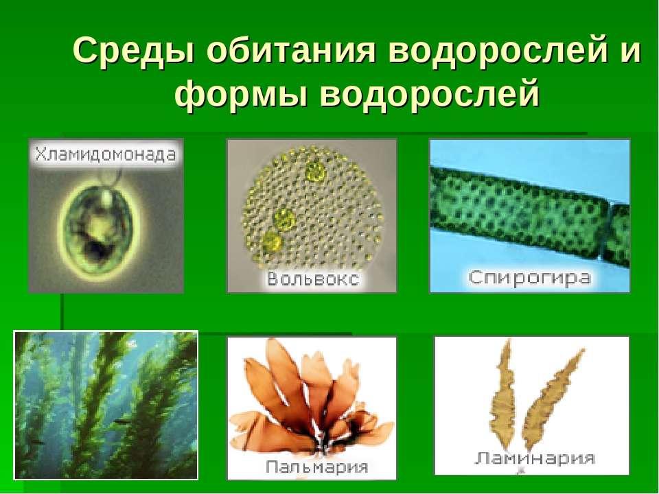 Среды обитания водорослей и формы водорослей
